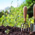 Выбираем лучший вид бактериальных удобрений для частных загородных участков?