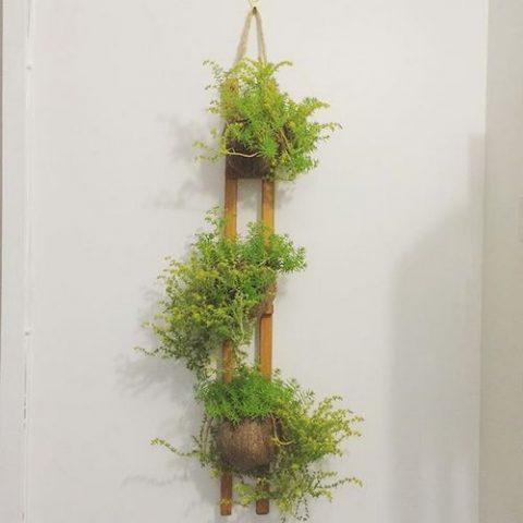 Озеленение лоджии: 15 фото