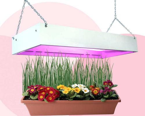 Фитолампы светодиодные лампы для растений - особенности