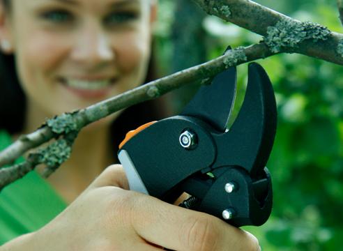 Как правильно обрезать деревья и кустарники