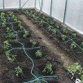 Капельный полив в теплице и на огороде своими руками