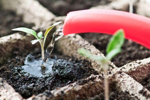 Что сажать на рассаду в январе из овощных и цветочных культур?